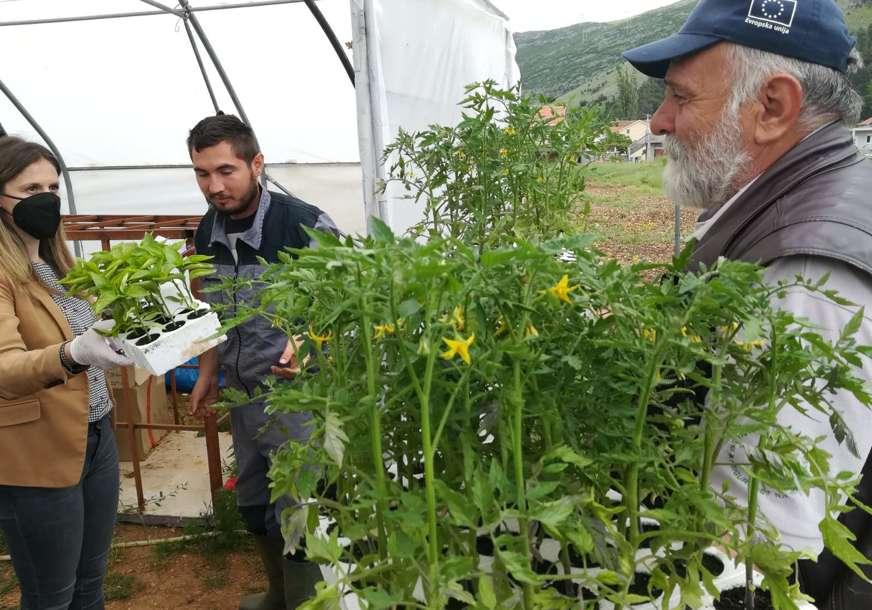 Besplatne sadnice za poljoprivrednike: Agrarni fond podijelio rasad paradajza i paprike