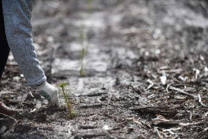 AMBICIOZNA KAMPANJA POŠUMLJAVANJA Saudijska Arabija će posaditi deset milijardi stabala