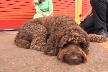 Ovaj pas je PRAVI HEROJ: Mlada žena htjela da skoči s mosta i ubije se, ali je zbog njega danas živa (VIDEO)