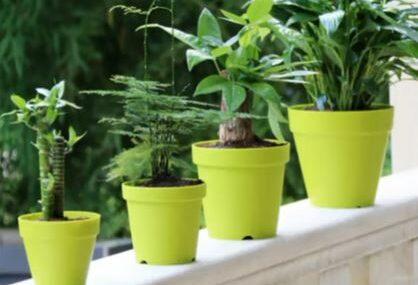 BUDITE BEZ BRIGE Tri savjeta kako da biljke prežive vaš odmor