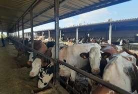 SAJBER NAPAD Hakeri zaustavili proizvodnju mlijeka u Austriji