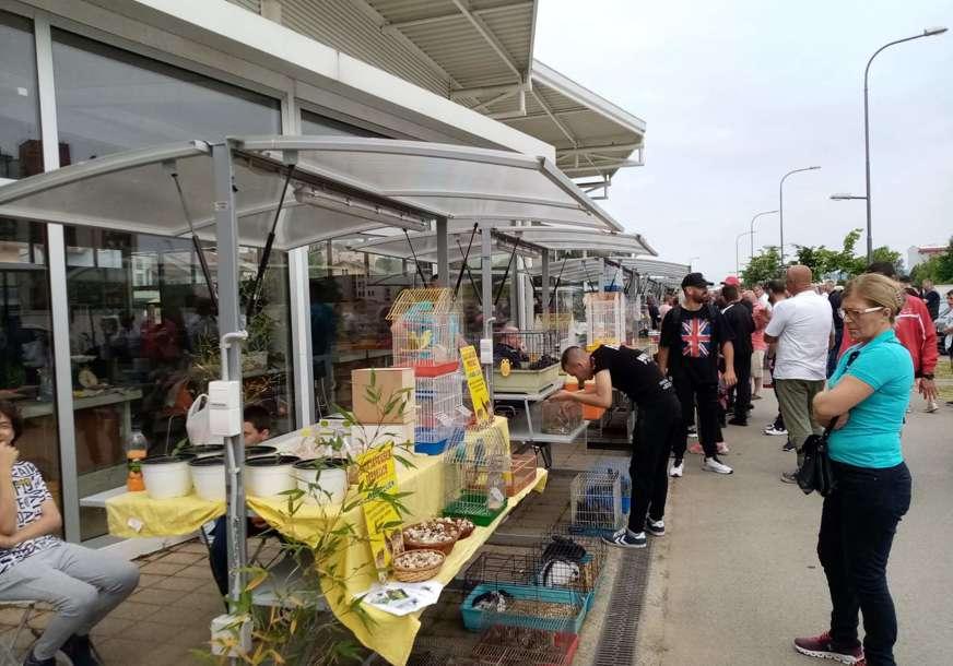 Učestvuje oko 40 uzgajivača iz 15 gradova BiH: U Prijedoru organizovana prodajna izložba sitnih životinja (FOTO)