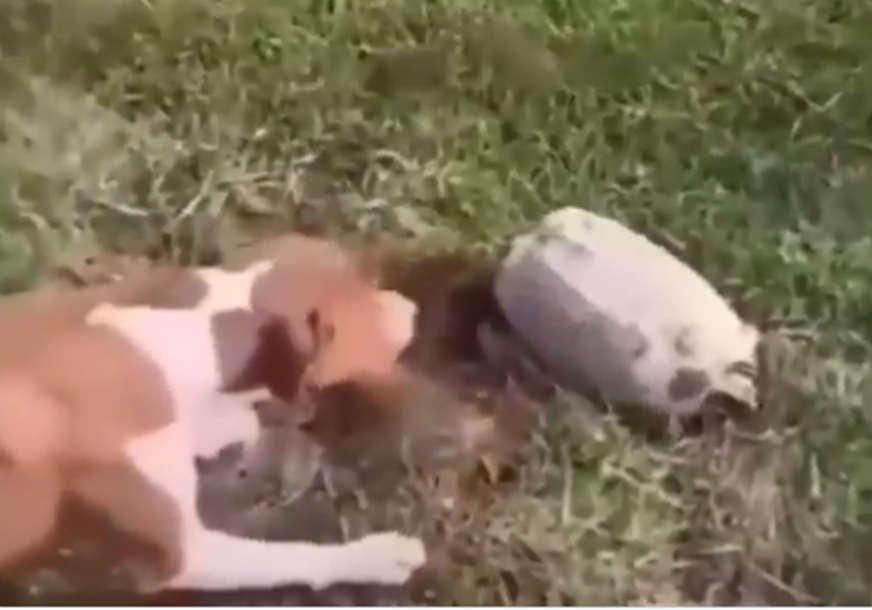 Bliski susret treće vrste: Kako je radoznalost mogla skupo da košta jednog psa (VIDEO)