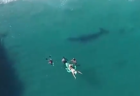 PLIVALA PORED NJIH Kupali se u plićaku i nisu obratili pažnju na životinju od 10 metara (VIDEO)
