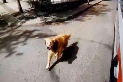 Nije mogao da je pusti samu: Pas trčao sve do bolnice u koju je smještena njegova vlasnica i nije htio da se pomjeri sve dok se ona nije pojavila (VIDEO)