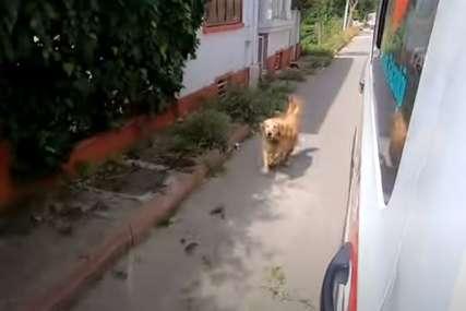 ČOVJEKOV NAJBOLJI PRIJATELJ Pas nije htio da napusti vlasnicu, trčao je za vozilom Hitne pomoći sve do bolnice (VIDEO)