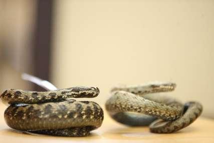 Tri stvari nikako ne radite: Kako se ponašati u prirodi i šta preduzeti ako vas ugrize zmija