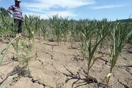Ministarstvo demantuje poljoprivrednike: U sisteme za navodnjavanje za osam godina uloženo 50 miliona KM