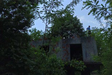 Drogu sadili u kanti: U šumi pronađen zasad indijske konoplje (FOTO)