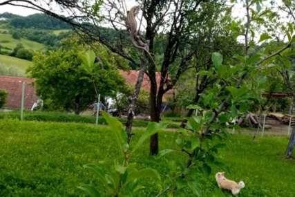 RIJEŠENA MISTERIJA Evo koja vrsta guštera je uzbunila mještane Svodne kod Novog Grada