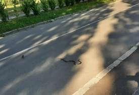 Stanovnici danima ne spavaju mirno: Najezda zmija u Sarajevu