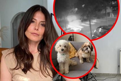 Voditeljka i njene kćerke prolaze kroz traumu: Kakva KAZNA PRIJETI BAHATOM VOZAČU koji je usmrtio psa Ane Mihajlovski