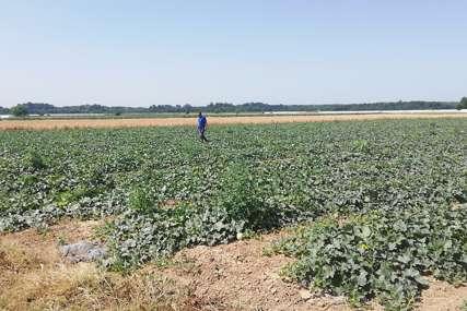 Gore i nebo i zemlja: Suša poskupljuje proizvodnju povrća