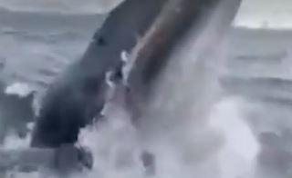 Nesvakidašnja scena: Kit izletio iz mora i htio da USKOČI ljudima u čamac (VIDEO)