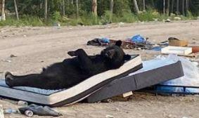 IZNENADIO SVE Fotografija medvjeda postala hit, nije teško uočiti zašto