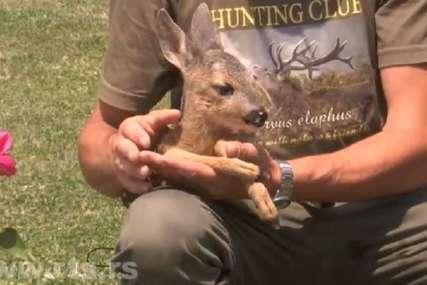 Lovac odbranio lane od pasa lutalica: Beba Živko se odomaćio, najviše voli kozje mlijeko