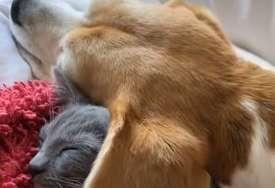 Maca je našla nesvakidašnji pokrivač za sebe: Preslatke avanture ovog dvojca su atrakcija na Tiktoku (VIDEO)