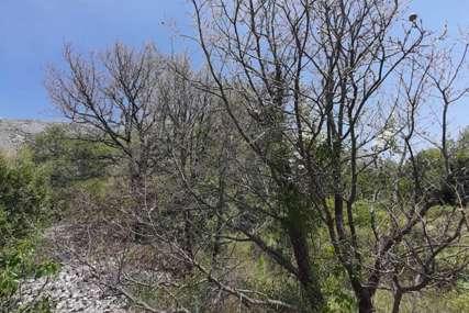 Ovakvu najezdu štetočine ne pamte ni najstariji: Gubar NAPAO ŠUMU u okolini Trebinja