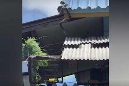 Piton je sa krova ugledao plijen u vodi, dijelilo ih je ŠEST METARA, a onda je usledio napad (VIDEO)