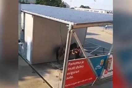 """""""Ma, okupala bih ja njega"""" Prao konja u autopraonici i izazvao bijes javnosti (VIDEO)"""
