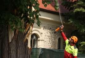 Kastel pun stršljenova: Na oborenim stablima nađena gnijezda, svi u strahu od insekata (FOTO)