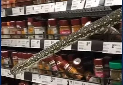 Šok u trgovini: Kupovala začine kada joj je iz police iskočila zmija od tri metra (VIDEO)