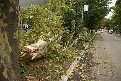 Srušilo se kao da je od papira: Debelo stablo blokiralo troatar u Aleji Svetog Save