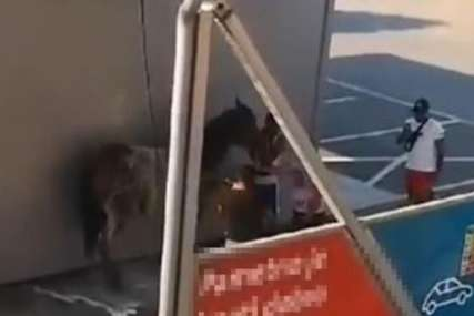 NEVJEROVATNA SCENA Momci u perionicu došli sa konjem i šokirali sve (VIDEO)
