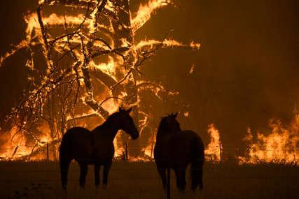 Vatrena stihija kod Atine: Od požara spašeno više od 200 trkačkih konja