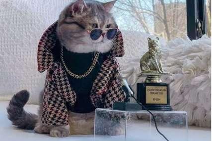 Spasili ga ulice i napravili od njega Instagram zvijezdu: Mačak svakodnevno pozira i isprobava nove odjevne kombinacije (FOTO)