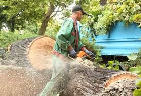 Nevrijeme napravilo kolaps: Kod dvorane Borik srušeno stoljetno stablo (FOTO)