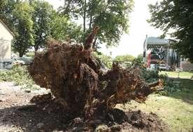 Haos na Kastelu: Vjetar oborio dva ogromna stabla, vatrogasci raščišćavaju teren (FOTO)