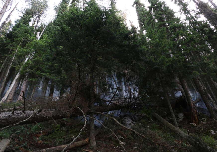 Ekološka KATASTROFA kod Višegrada: Oko 80 odsto stabala Pančićeve omorike zahvatio požar (FOTO)
