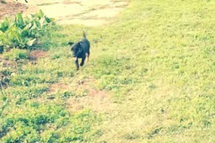 Najvjerniji čovjekov prijatelj: Pas prešao više od 300 kilometara da se vrati svojim vlasnicima