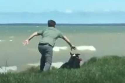 Pas umalo pao sa litice, spasio ga hrabri vlasnik (VIDEO)