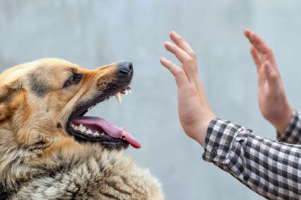 """""""Nisu krivi psi, već neodgovorni vlasnici"""" Učestali napadi životinja uznemirili Banjalučane"""
