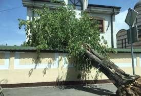 Staro stablo palo na ogradu kuće: Tužna scena iz jedne od najljepših banjalučkih ulica