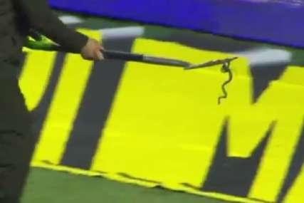 Zmija prekinula meč Partizanovog protivnika (VIDEO)