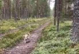"""Gore društvene mreže """"Prodajem lovačkog psa, a snimak će vam pokazati zašto"""""""