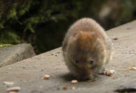 TVITER VRIŠTI OD SMIJEHA Učenik dao hit odgovor na pitanje o kretanju miša (FOTO)