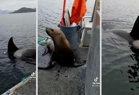 Na brod joj se popeo MORSKI LAV koji je pobjegao od kitova, njena reakcija razbjesnila sve (VIDEO)