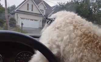 To samo oni mogu: Pas pokušao zaštititi vlasnicu od brisača na autu (VIDEO)