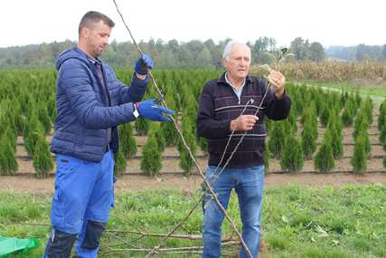 Poteškoće proizvođača sadnica voća u Lijevču: Rasadnicima nedostaju radnici i tržište (FOTO)