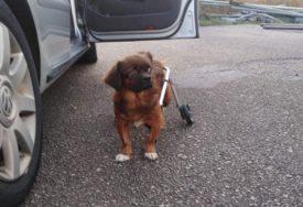 Kako je psić iz Banjaluke otputovao u Češku: Prije dva mjeseca ostavljen da ugine, a sad ima novi dom i novo ime (FOTO)